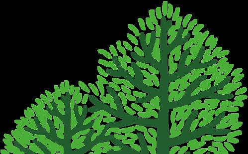 右樹.png