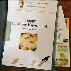 happy hatching, chick, incubation, chick hatching