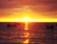 dauphins coucher soleil amphitrite martinique excursion activité whales watching