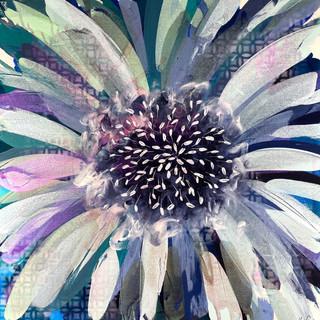 Blue Bloom.jpg