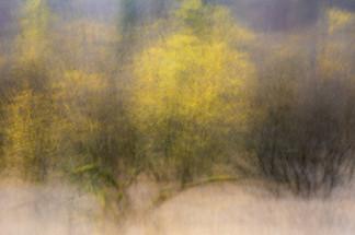 Lake District Autumn trees 2