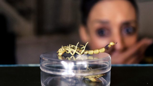 Grub's Up: Eating insects for one week