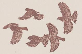 A flock in flight - detail