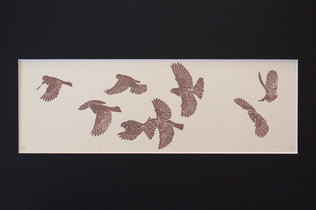 A flock in flight