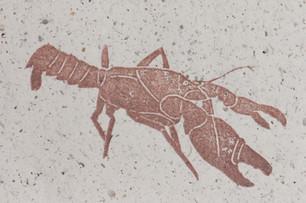 Burnie burrowing crayfish