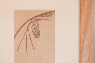 Baetid mayfly