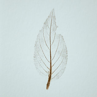 leaf nature print