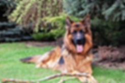 Naturopathie pour chiens et chats