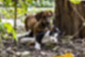 Naturopathie pour chien et chat