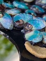 abalone weaning feed.JPEG