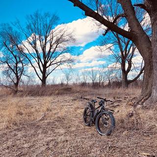 Rambo Bike Pilot Knob Trees.jpg