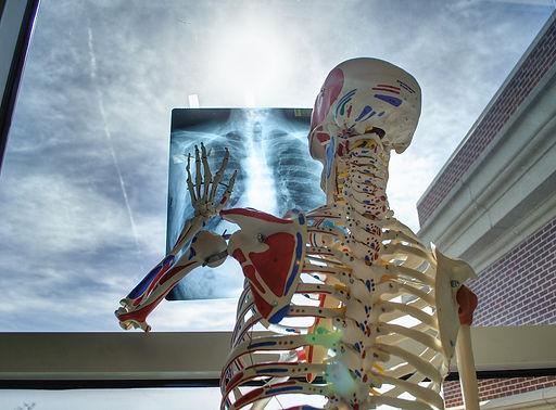 skeleton-2561573_1280.jpg
