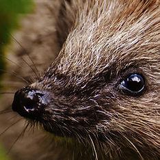 hedgehog-child-1759465_1920 (1).jpg