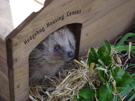 Resultaten van een onderzoek naar egelhuisjes: 'Hedgehog housing census'