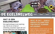 Poster Egelsnelweg - egels in de tuin