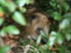 hedgehog-627618_1920.jpg