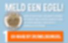 Poster meld een egel - egelwaarnemingen doorgeven