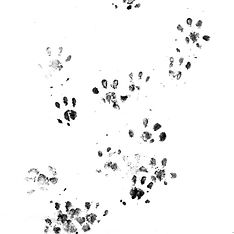hedgehog-hero_01.jpg