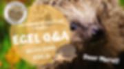 EGEL Q&a.png