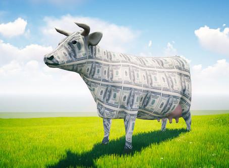 Cash cow (Деловые английские идиомы)