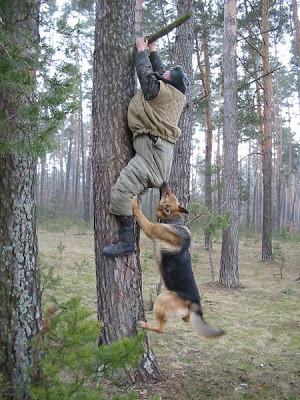 Barking up the wrong tree (Деловые английские идиомы)