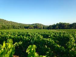 Plaine des vignes de Cornillon