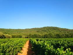 Les vignes de Cornillon