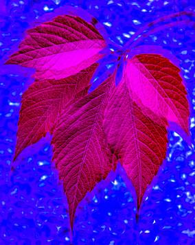 'Blue Autumn Creeper' by Sue McBean ( 8 marks )