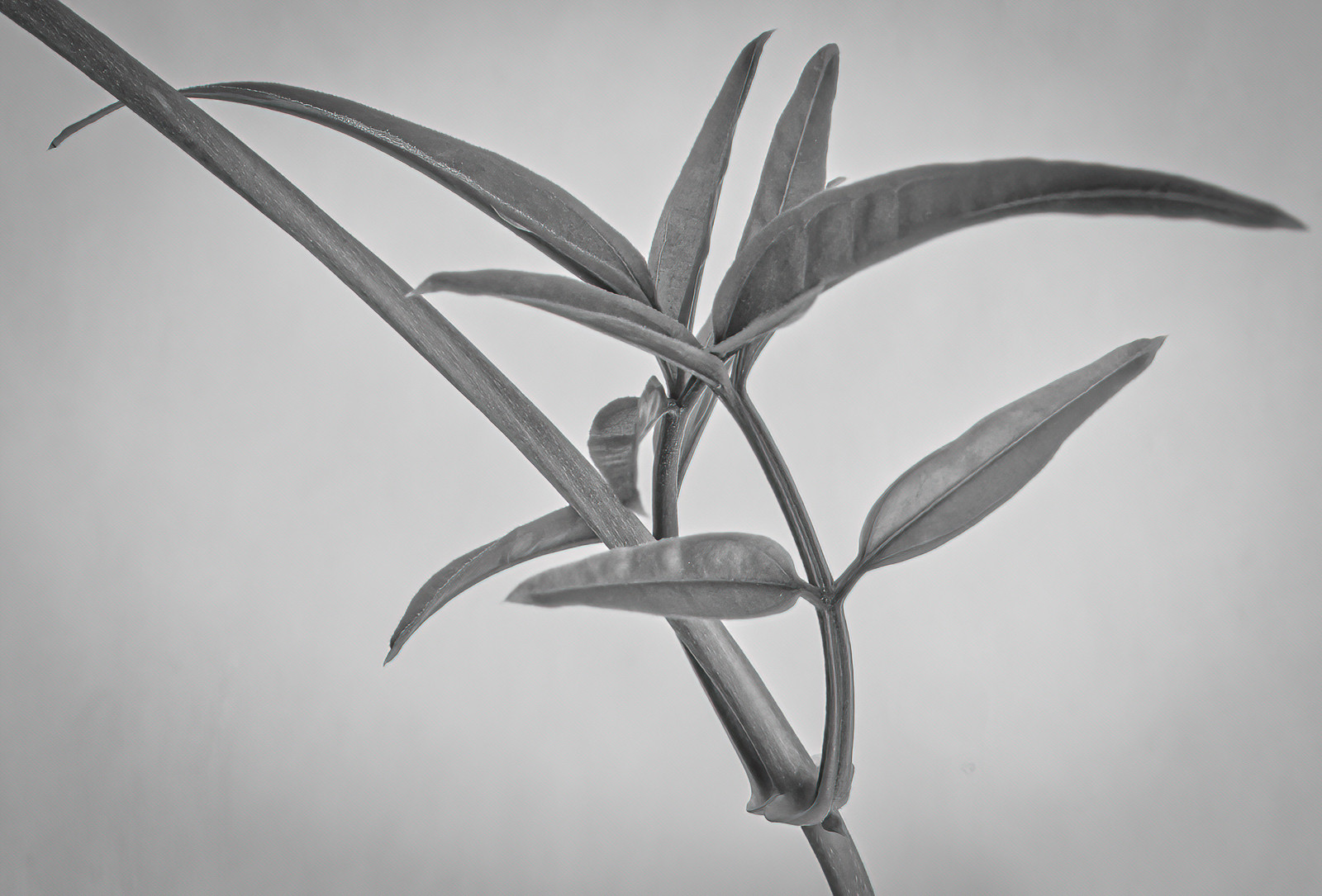 'Indoor Jasmine' by Andrew Cameron-Mitchell ( 9 marks )