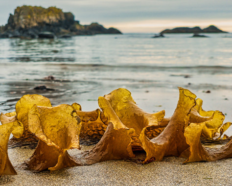 'Seaweed' by Andrew Cameron-Mitchell - Commended