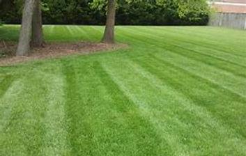 Weed control, Fertilizer