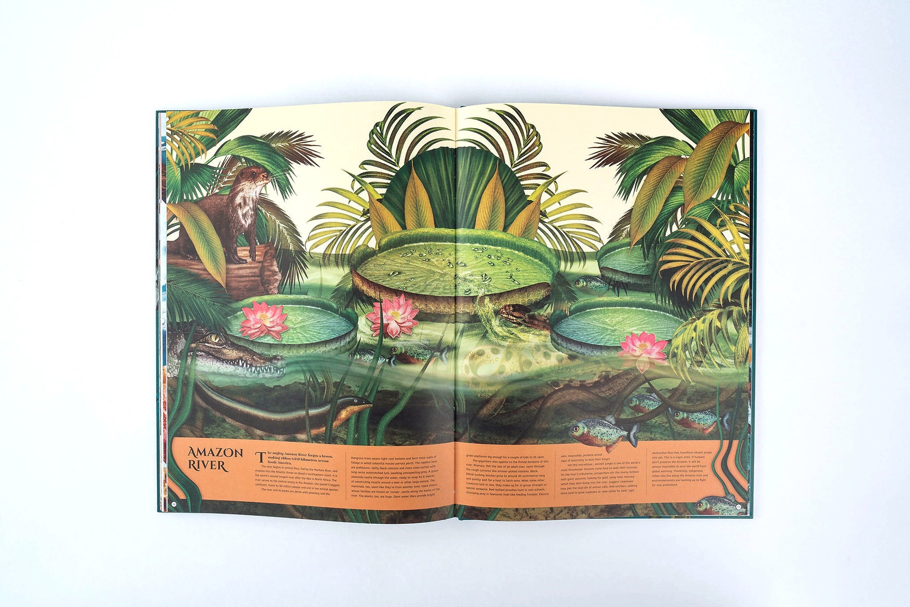 MAG1851-MagicCatPublishing-Books1246_edi