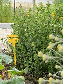 Agriturismo Olianina, Villa Poma, Agriturismo Mantova, Erbe aromatiche, orto aromatico, pernottamento e prima colazione Mantova