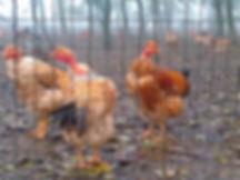 Agriturismo Olianina, Villa Poma, Agriturismo Mantova, allevamento avicoli a terra, capponi, galline, faraone, pernottamento e prima colazione Mantova