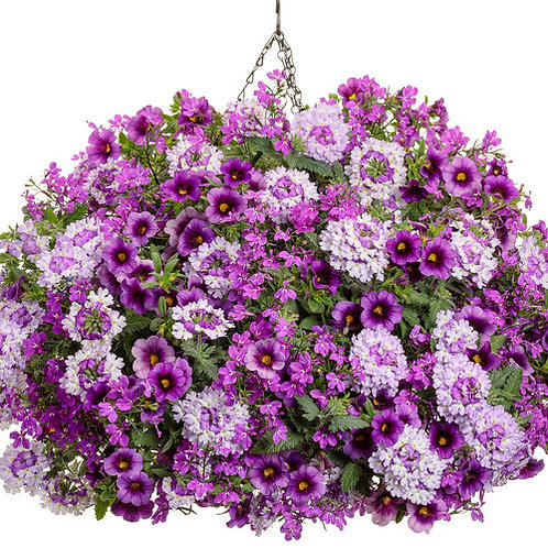 Sparkle and Glow Hanging Basket