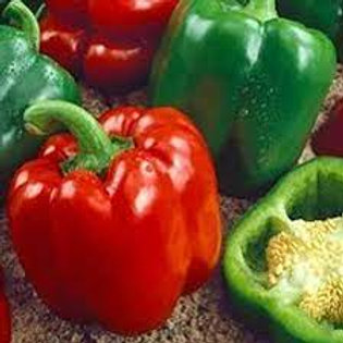 Keystone Green/Red Pepper