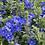 Thumbnail: Evolvus - Blue My Mind - Filler