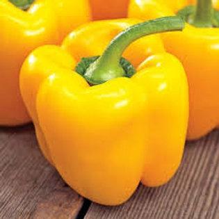 Golden California Pepper