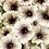 Thumbnail: Petunia - Supertunia Latte - FILLER/SPILLER!