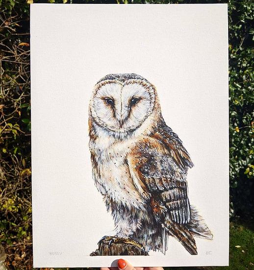 'Bobby' Barn Owl Print