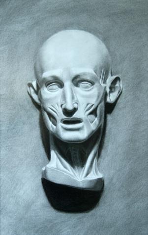Anatamical Face