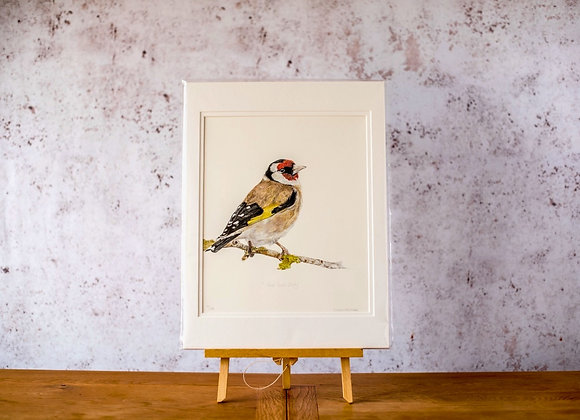 """""""Gold finch study"""" limited edition print"""