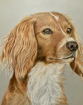 pretty tan dog portait