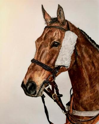 Stunning Horse Portrait