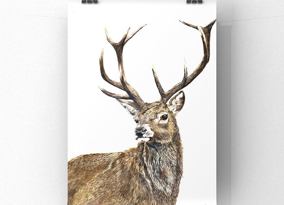 """His royal highness"" limited edition giclee print"