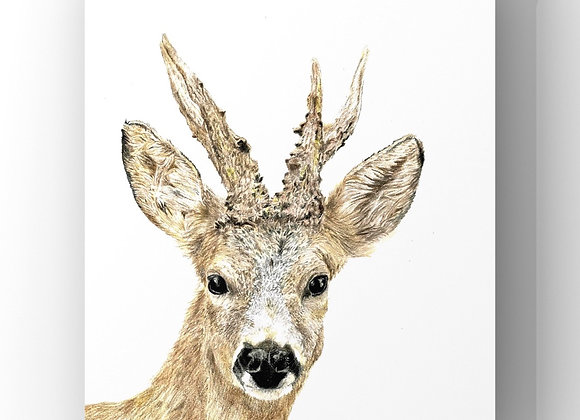 """Roe buck"" Giclee prints"