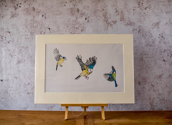 """Blue tit study""Limited edition giclee print"