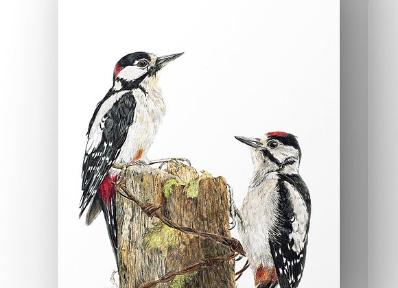 """Great spotted woodpecker study"" limited edition giclee print"