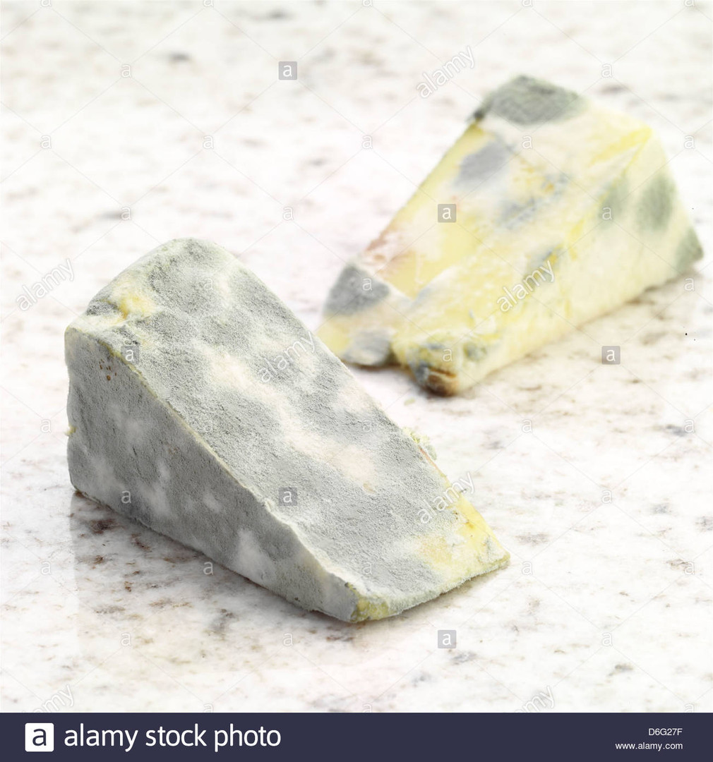 grey mouldy-cheese