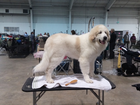 Practical (Basic) Grooming